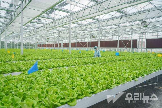 난퉁시 퉁저우구 스쭝진에 위치한 '식물공장' 내부.